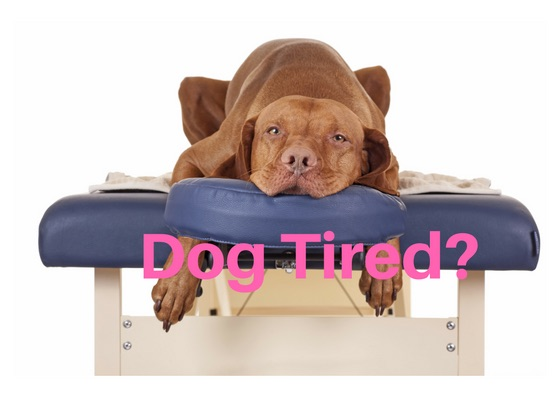 Are you Dog tired?